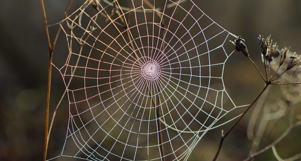 Virtual assistant gezocht die een spin in het web is? En die naast VA ook moeiteloos een project kan leiden? Dat ben ik!